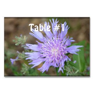 Pretty Lavender Scabiosa Card