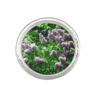 Pretty Lilac Bush Photo Ring