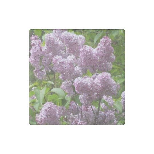 Pretty Lilac Bush Stone Magnets