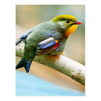 Pretty Little Bird Postcard