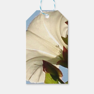 Pretty lucent flower pack of gift tags