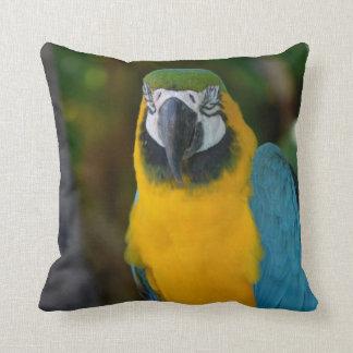 Pretty Macaw Throw Pillow