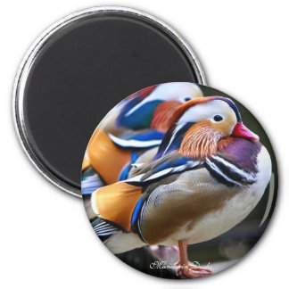 Pretty Mandarin Ducks,  Round Magnet