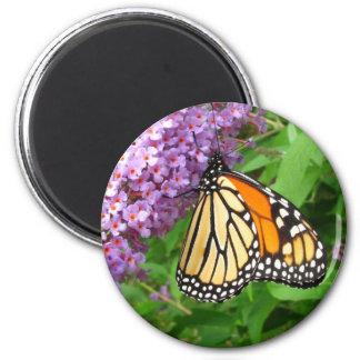 Pretty Monarch ~ magnet
