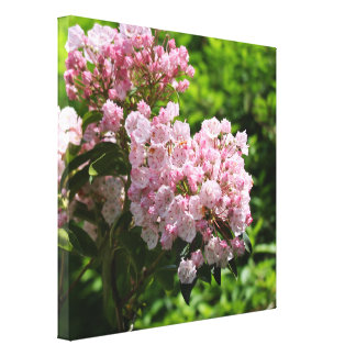 Pretty Mountain Laurel Pink Flowers Canvas