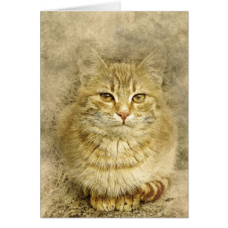 Pretty Orange Kitty | Abstract | Watercolor Card