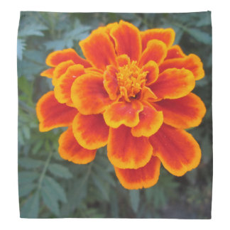 Pretty Orange Marigold Bandanna