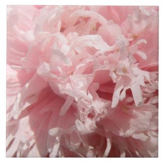 Pretty Pale Pink Poppy Tile