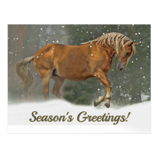 Pretty Palomino Draft Horse in the Snow Christmas Postcard