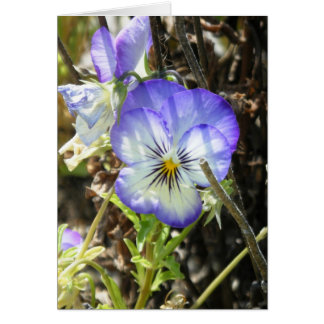 """Pretty Pansy"" Card"