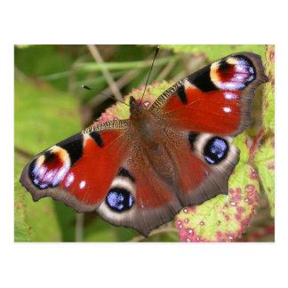 Pretty Peacock Butterfly Postcard