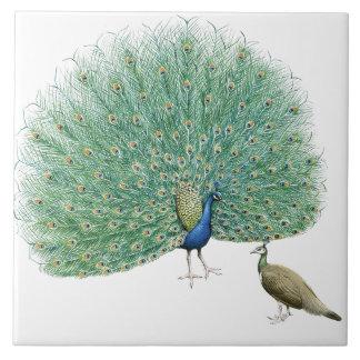 Pretty Peacock Tile