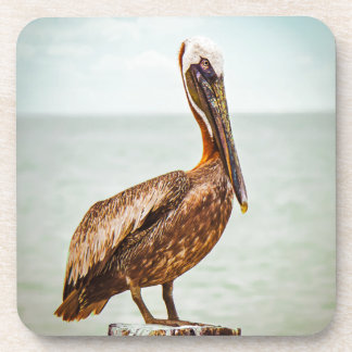 Pretty Pelican Perched Over the Ocean Drink Coaster