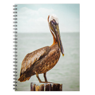 Pretty Pelican Perched Over the Ocean Notebooks