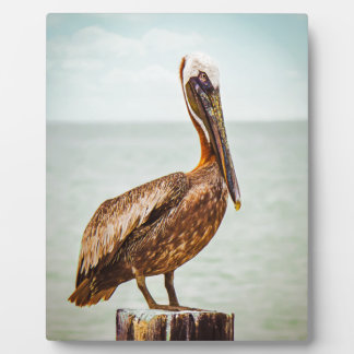 Pretty Pelican Perched Over the Ocean Plaque