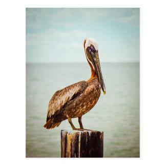 Pretty Pelican Perched Over the Ocean Postcard