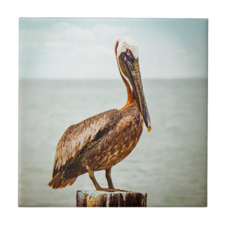 Pretty Pelican Perched Over the Ocean Tile