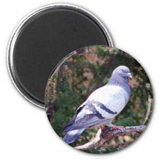 Pretty Pigeon Magnet