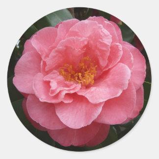Pretty Pink Camellia Floral Photo Sticker