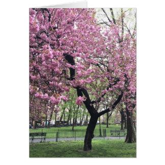 Pretty Pink Cherry Blossom Tree NYC New York City Card