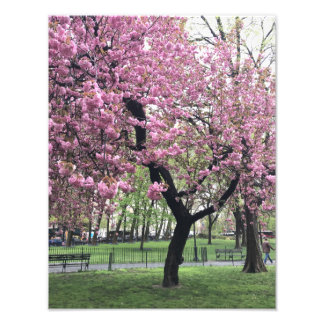 Pretty Pink Cherry Blossom Tree NYC New York City Photographic Print