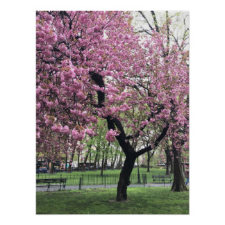 Pretty Pink Cherry Blossom Tree NYC New York City Poster