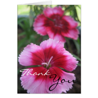 Pretty Pink Dianthus Greeting Card