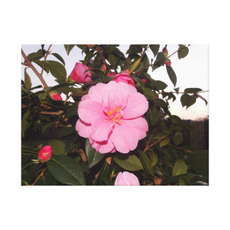Pretty Pink Flower Canvas Print