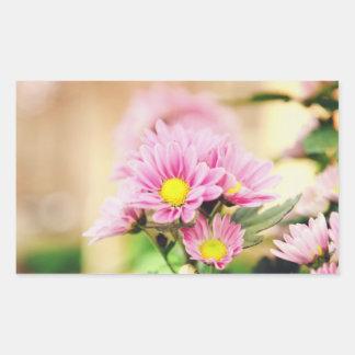 Pretty pink garden flowers