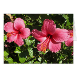 Pretty Pink Hibiscus Flowers Greeting Card