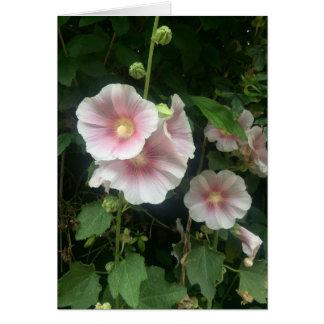 Pretty pink hollyhocks Spring garden Card