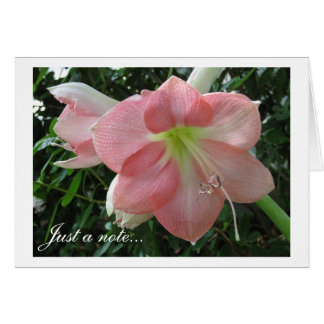 Pretty Pink Lily Card