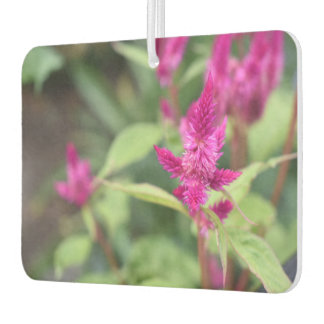 Pretty Pink Magenta Flowers Celosia Garden Photo Air Freshener