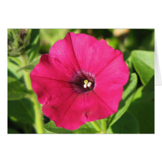 Pretty Pink Petunia Greeting Card