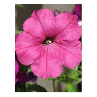 Pretty Pink Petunia Postcard
