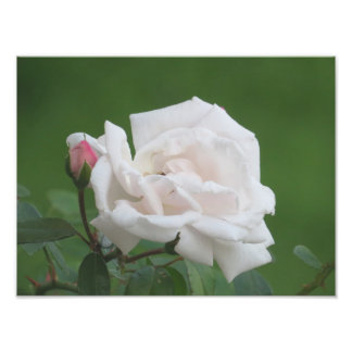 Pretty Pink Rose Art Print Photograph