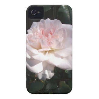 Pretty Pink Rose Blackberry Bold Case