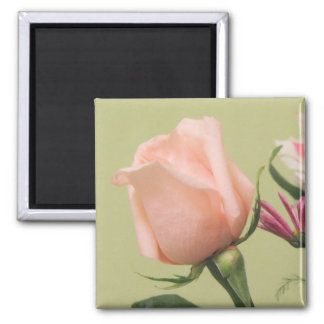 Pretty Pink Rose Magnet