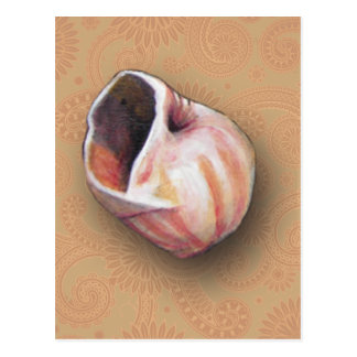 Pretty Pink Seashell From The Beach Postcard