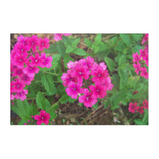 Pretty pink verbena flowers floral photo acrylic wall art