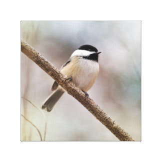 Pretty Puffy Chickadee Bird on Tree Branch Soft Canvas Print