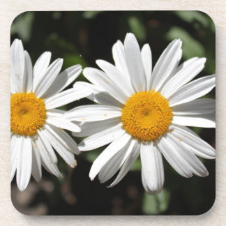 Pretty pure white daisy flowers drink coaster