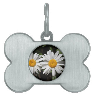 Pretty pure white daisy flowers pet name tag