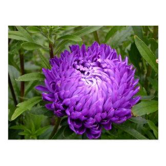 Pretty Purple Flower postcard