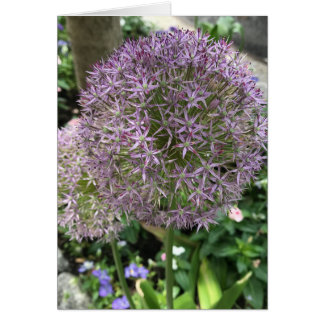 Pretty Purple Flowers Allium Garden NYC Photo Card