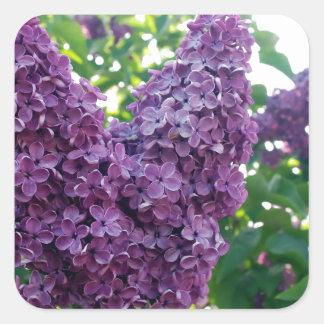 Pretty Purple Lilacs Square Sticker