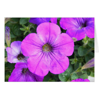 Pretty Purple Petunias Greeting Card