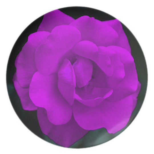 Pretty purple rose and its meaning plate