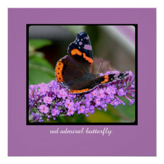Pretty Red Admiral Butterfly Perfect Poster