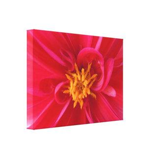 Pretty Red Dahlia - Canvas Print